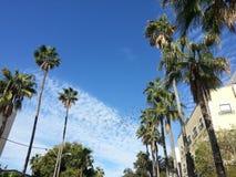 tropisk sky Royaltyfri Bild