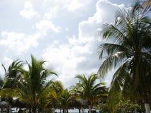 tropisk sky Arkivbild