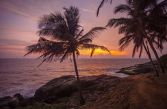 Tropisk-solnedgång Royaltyfri Fotografi