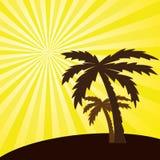tropisk solnedgång och palmträd. Royaltyfri Foto