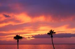 Tropisk solnedgång och två palmträd royaltyfri fotografi