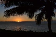 Tropisk solnedgång på havpalmträdet Arkivbilder