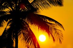 Tropisk solnedgång, palmträd och stor sol Royaltyfria Foton