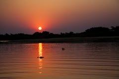 Tropisk solnedgång reflekterad på floden, norr Pantanal, Brasilien Arkivfoto