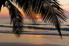 Tropisk solnedgång bak palmträdet Royaltyfri Foto