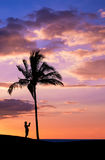 Tropisk solnedgång med konturer Royaltyfria Bilder