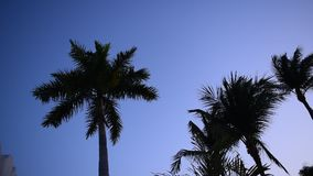 tropisk soluppgång stock video
