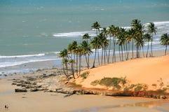 tropisk sommar Arkivbilder