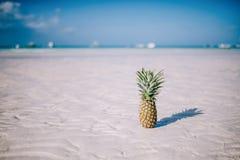 Tropisk sommarfröjd Ny ananas på den vita sandstranden Royaltyfria Bilder