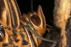 tropisk stående s för 3 fjäril Arkivbild