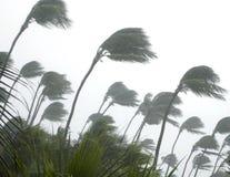 tropisk storm Arkivfoto