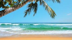 Tropisk strand stock video