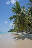 tropisk strand Royaltyfri Bild