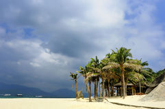 Tropisk strand av palmträd 免版税库存照片