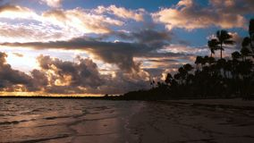 Tropisk strand för ö med vita sand, turkoshavsvatten och kokosnötpalmträd dominikansk puntarepublik för cana stock video