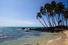 Tropisk strand (Hawaii/USA) Royaltyfri Bild