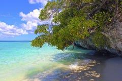 Tropisk strand i Lifou, Nya Kaledonien Royaltyfri Fotografi