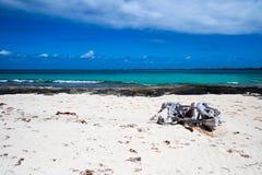 Tropisk strand med drivved Royaltyfria Bilder