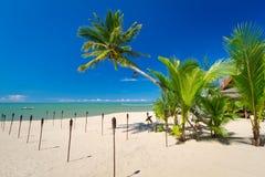 Tropisk strand med kokosnötpalmträdet Arkivbilder
