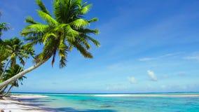 Tropisk strand med palmträd i franska Polynesien stock video