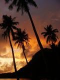 Tropisk strand med palmträd på soluppgång, Ang Thong National Ma Arkivbilder