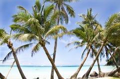 Tropisk strand med palmträdet arkivbild