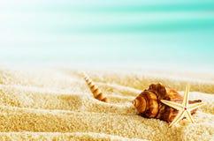 Tropisk strand med snäckskal på en varm sommardag Arkivbild