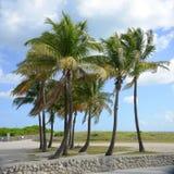 Tropisk strand, Miami Beach Arkivfoto