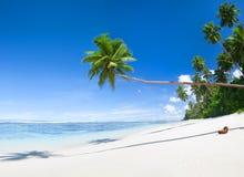 Tropisk strand och kokospalmer royaltyfria bilder
