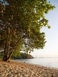Tropisk strand på den flores ön, bali, indonesia Royaltyfri Foto
