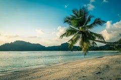 Tropisk strand på den Mahe ön Seychellerna Arkivfoto