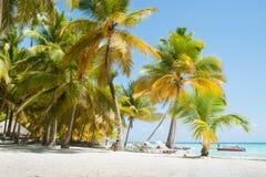 Tropisk strand på den Saona ön royaltyfri foto