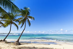 Tropisk strand på Le Moule, Guadeloupe ö Royaltyfria Bilder