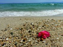 tropisk strandblomma Royaltyfria Foton