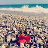 tropisk strandblomma Fotografering för Bildbyråer