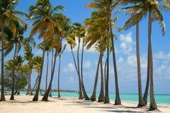 Tropisk stranddag som omges av palmträd Arkivfoton
