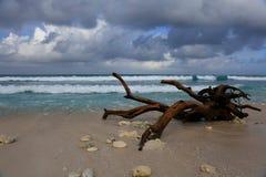tropisk stranddriftwood Royaltyfri Foto