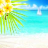 tropisk strandkant Royaltyfri Fotografi