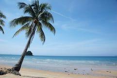 tropisk strandpalmträd Arkivbild
