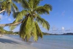 tropisk strandpalmträd Fotografering för Bildbyråer