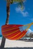 tropisk strandpalmträd Arkivfoto