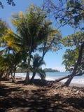 Tropisk strandsikt som är dominical royaltyfria bilder