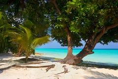 tropisk strandtree Arkivbilder