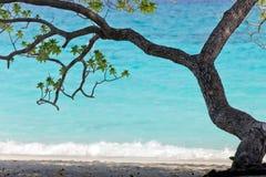 tropisk strandtree Fotografering för Bildbyråer
