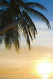 tropisk sundown Arkivfoto