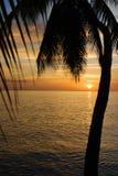 tropisk sundown Fotografering för Bildbyråer