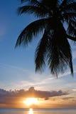 tropisk sundown Arkivbild