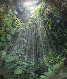 Tropisk sunrainforestlampa Arkivfoton