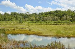 tropisk swamp arkivbild