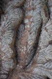 Tropisk textur för palmträdskäll Royaltyfria Bilder